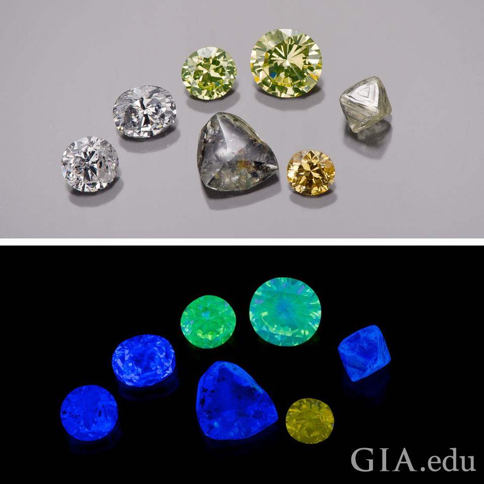 The Different Fluorescence Colors Like Blue, Green and Yellow
